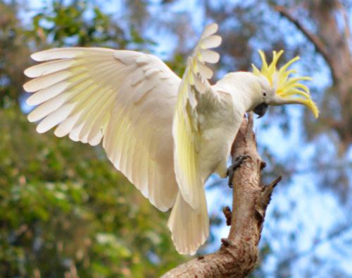 Criadouro de Aves Exóticas
